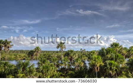 Amazon River with green lush trees and a blue sky