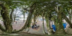 Amazon Tree at 360 in the Malecon of Coca city Ecuador