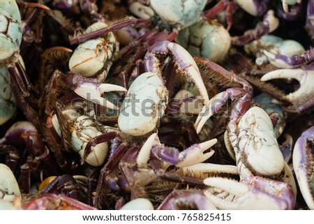 Shutterstock Amazonian regional alive crab displayed for sale in famous Ver-o-Peso public market in Belem do Para, Brazil. Exotic gastronomy concept. Background with selective focus