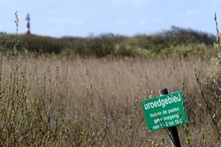 Ameland 2021, Warning sign with Dutch text:breeding area, no access outside the paths. Bird breeding area and dune nature reserve, reed collar and firehouse in background.