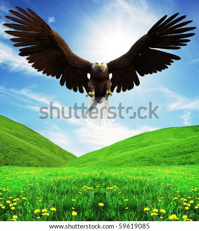 american bald eagle attacking