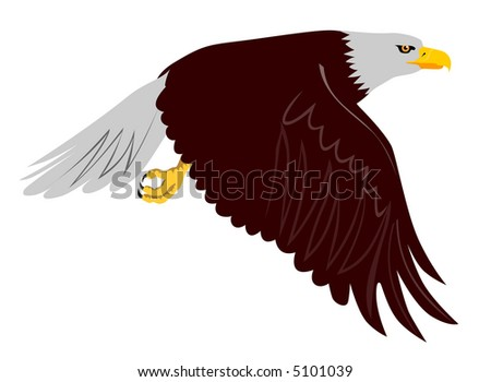 american eagle flying. American Bald Eagle flying