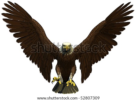 american bald eagle flying front