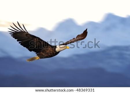 american bald eagle in flight against illustrated alaska mountains