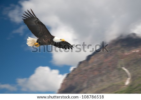 american bald eagle in flight illustrated over rocky mountain