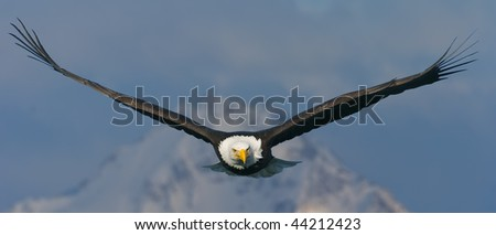 american bald eagle in flight superimposed against alaska mountain peak