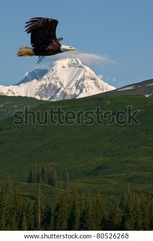 american bald eagle in flight superimposed over alaska coastal mountains