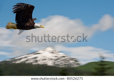 american bald eagle in flight superimposed over alaska coastal mountains, actual pan of mountains