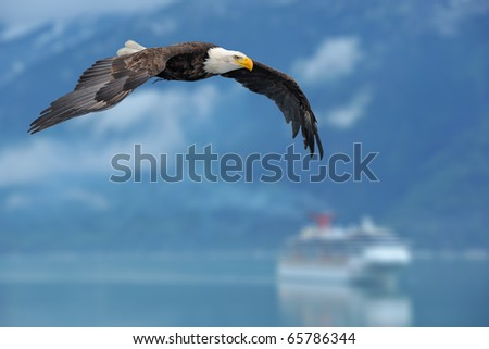 american bald eagle in flight superimposed over scene of alaska inside passage with cruise ship as illustration