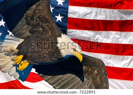 american bald eagle in flight superimposed over usa flag
