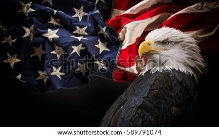 american bald eagle   symbol of ...
