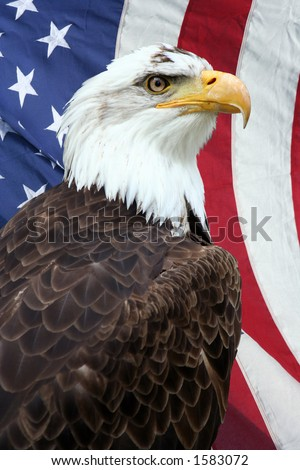 american flag background with eagle. stock photo : American bald