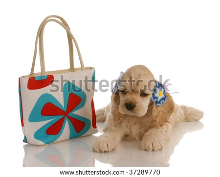 american cocker spaniel puppy laying beside colorful purse