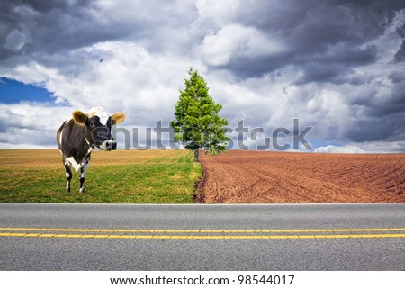 American Country Road with Cow