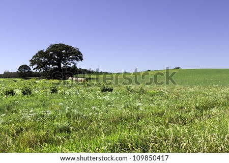 American countryside scenery