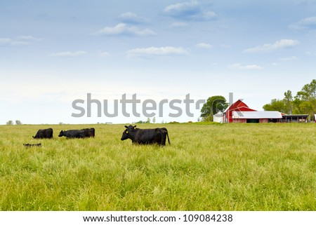 American Countryside With Cows and Farm