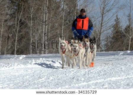 American Dog Sled Race on a Snowy Mountain Pass