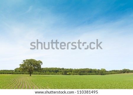 American Farmland With Blue Sky #110381495