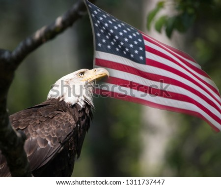 American Flag and Bald Eagle as Patriotic Symbols #1311737447