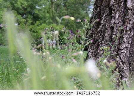Amikor egy macska meglapul a fűben és megcélozza a zsákmányt, valami ilyesmi nézőpontja lehet. Stock fotó ©