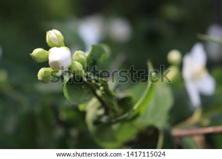 Amikor jön a tavasz és nyílnak a virágok Stock fotó ©
