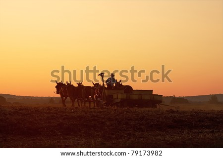 Amish farmer planting corn at sunset,Lancaster County,Pennsylvania