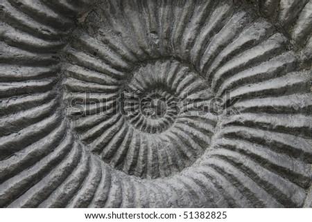 ammonite fossil background