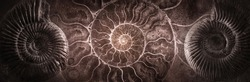Ammonite shell on an ancient background. Concept on topic of science, history, paleontology, archeology, geology. History of Earth background. Fossil ammonite as a symbol of origin of life on Earth.