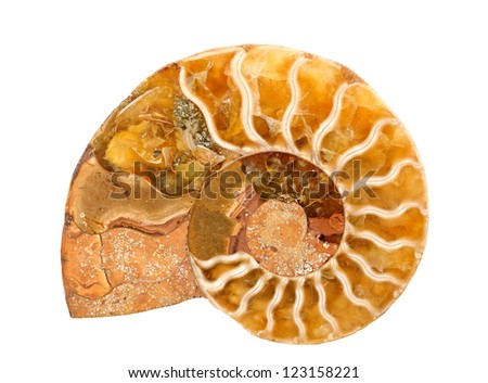 ammonite stone isolated on white