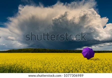Among field with blossom rapeseed, just before thunderstorm, concept of happy and healthy vacation. Eco-tourism is targeted at human health maintenance