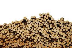 Amount of log pine wood stock at sawmill in europe with white background and clipping path. Europe industrial wood yard with stacks of new wood poles. Objects for garden, home construction.