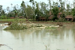 amphan cyclone destroyed all plants and block roads. houses are also destroyed in west bengal, india