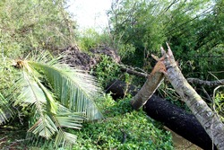 amphan cyclone in west Bengal, trees are broken down and road is blocked