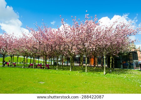 AMSTERDAM-APRIL 30: Sloped Lawn & Japanese Cherry Trees across the Museum Square on April 30,2015, the Netherlands. Museum Square is surrounded by the most important museums in Amsterdam.