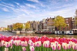 Amsterdam, Netherlands, city skyline at canal waterfront with spring tulip flower