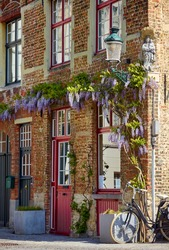 Amsterdam Netherlands. Corner brick house with big red window blooming vine lantern and ycle at street.