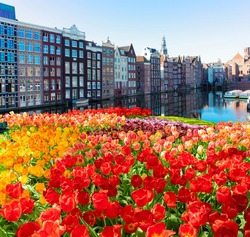 Amsterdam scenety with canal Damrak with typical dutch spring tulips , Holland, Netherlands.