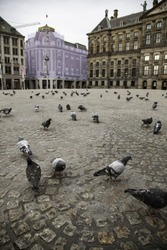 Amsterdam square with pigeons, detail of birds, tourism