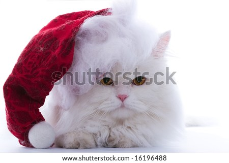 Amusing white fluffy cat in the Santa cap