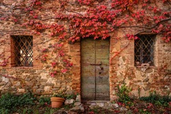 An abandoned building surrounded by red ivy. Autumn season.