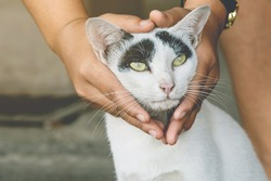 An abandoned stray black and white cat embraced and massaged by the girl's hands with love and compassion. Lovely cat in  kindness human hands, Vintage effect love for the animals. Pet care concept.