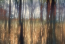 An abstract blurry forest background image.