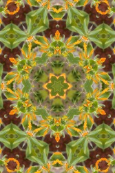 an abstract of a Mexican honeysuckle plant with green leaves and bright orange flower buds 4331