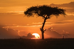 An acacia tree is silhouetted beside a big, yellow sunset.