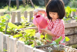 An adorable asian little girl watering plants in the garden. Montessori Practical Life skill - Caring for a Plant, Homeschool, Child development, Outdoors activity, Sustainable,  Alternative Education
