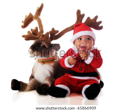 An adorable biracial baby in a Santa suit, snacking on a candy cane by his reindeer.  Isolated on white.