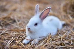 An adorable bunny rabbit relaxing.