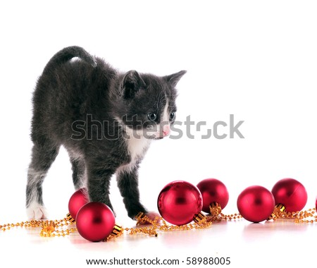 An adorable kitten among a string of red Christmas bulbs.  Isolated on white.