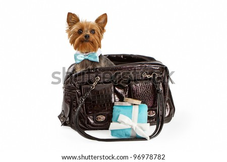 An adorable little Yorkshire Terrier dog wearing a fancy formal bow tie sitting in a designer pet travel carrier