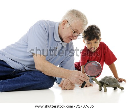 An adorable preschooler happily examining a box turtle with his grandpa.  On a white background.